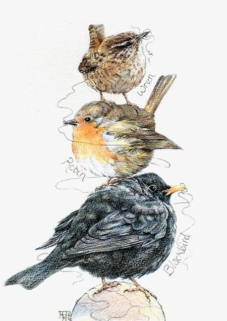 Three Little Birds - Blackbird, Robin and Wren